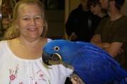 Гиацинт ара птиц для продажи